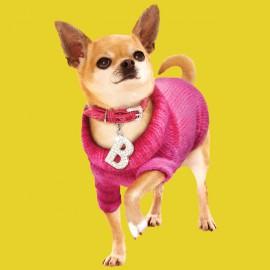 ropa de la camisa amarilla de la chihuahua