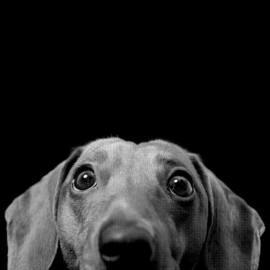 negro camiseta de perro diseño divertido